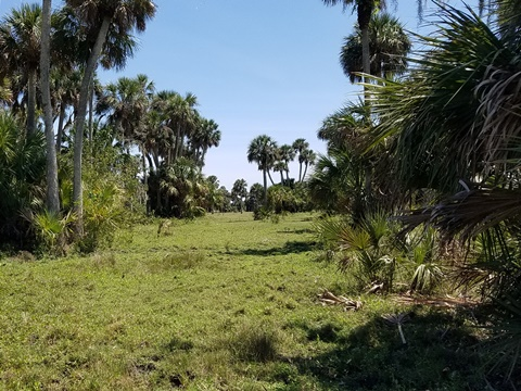 Lake Jesup Conservation Area